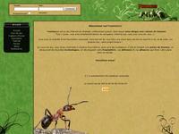 image du jeu Fourmizzz - Strategie de Fourmis